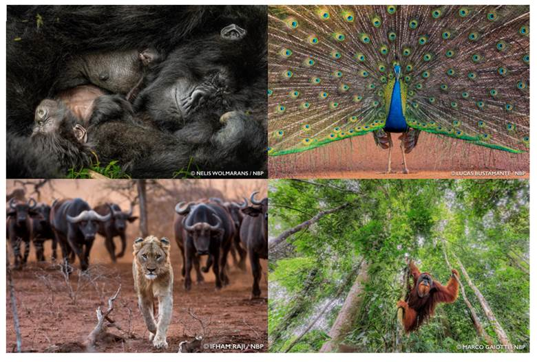 Epson's Nature Photo Awards